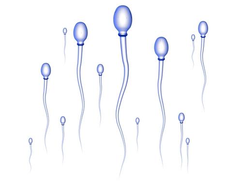 ilosc spermy2